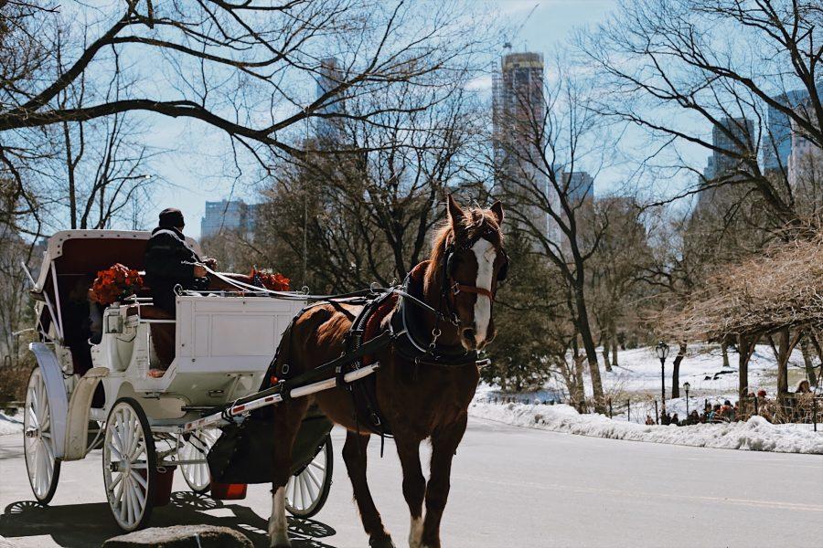 Central-Park-Tour-NYC