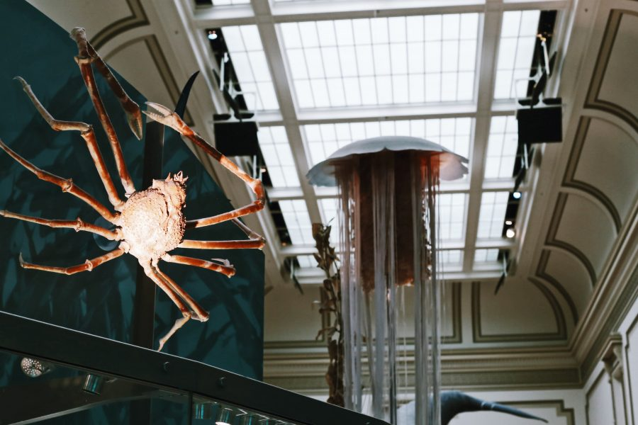 DC-Tour-Smithsonian-Natural-History-Museum-Washington