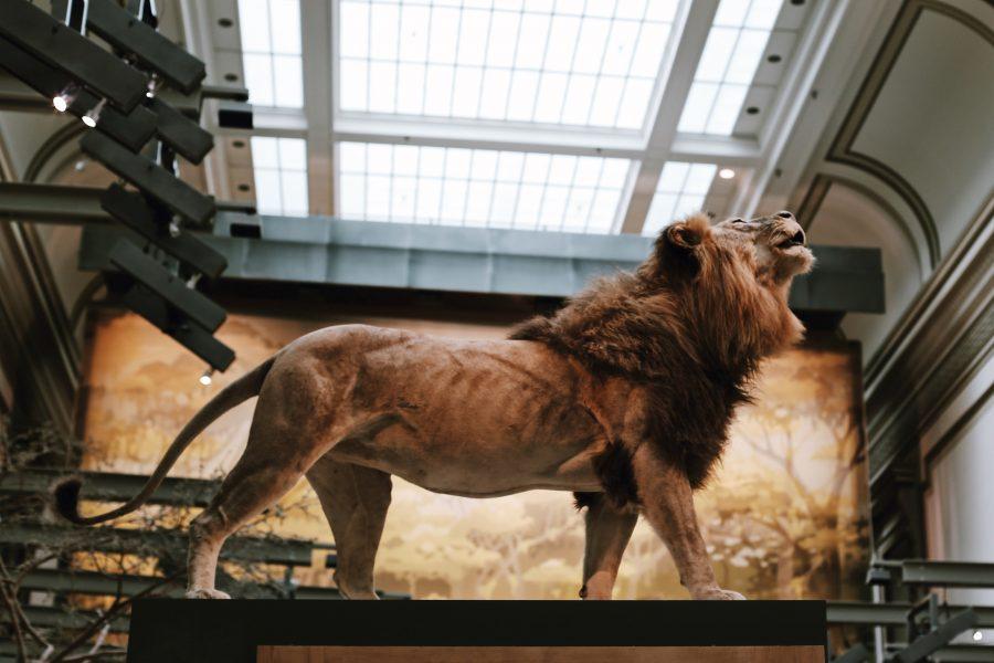 History-Washington-Smithsonian-Museum-Tour-Natural-DC