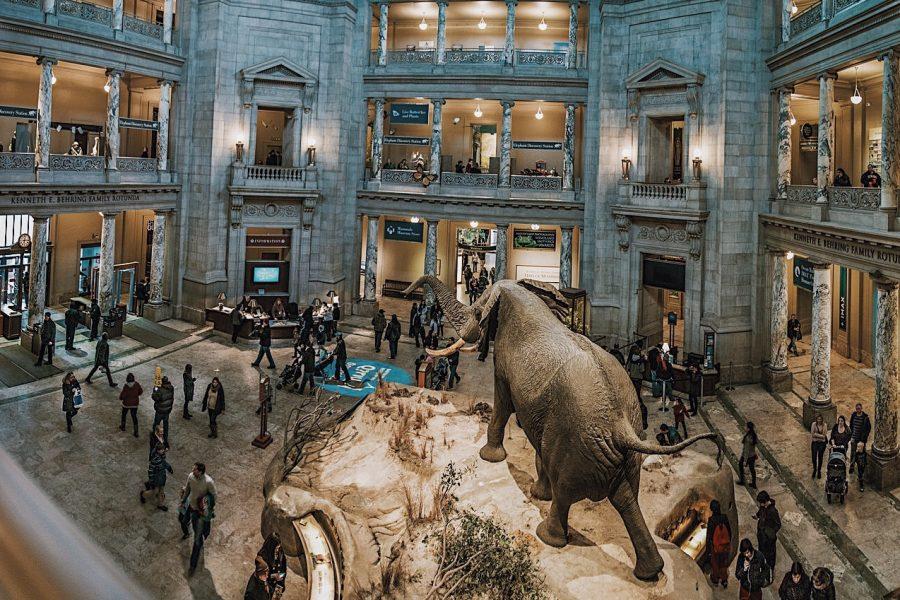 Smithsonian-Tour-History-Natural-Washington-DC-Museum