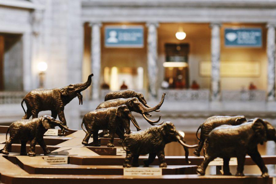Washington-DC-Tour-Natural-History-Smithsonian-Tour
