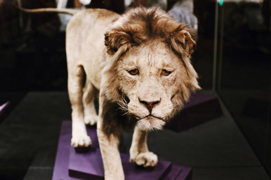 Washington-Tour-DC-Smithsonian-Natural-History-Museum