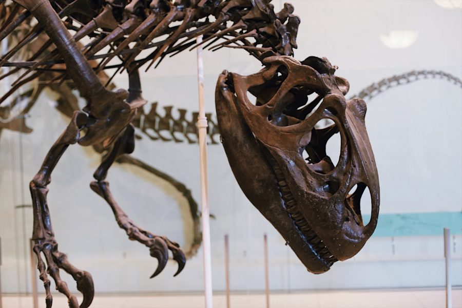 American-Museum-Tour-Natural-History-NYC