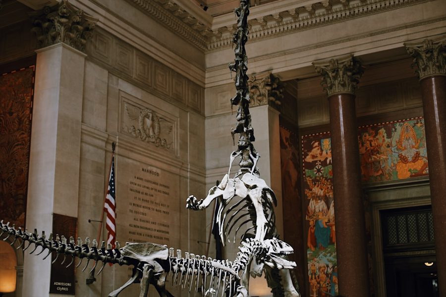 Museum-Natural-History-NYC-tour-American