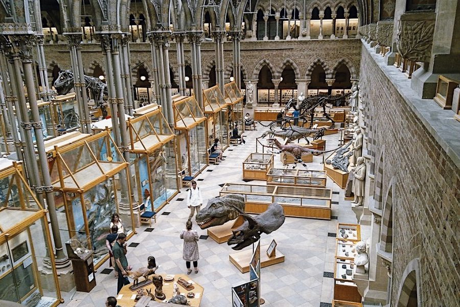 Museum-of-Natural-History-London