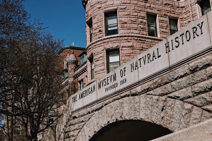 Tour-American-Natural-History-NYC-Museum